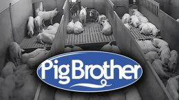 Logo Pig Brother